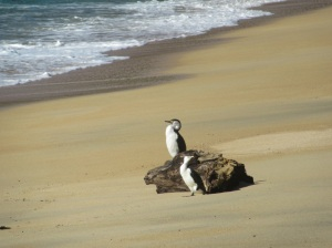 Even the wildlife were sunbathing!
