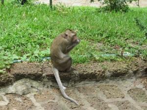 A monkey at Wat Phnom